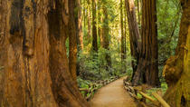 Muir Woods and Sausalito Experience, San Francisco, Day Trips