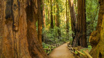 Trip naar Muir Woods en Sausalito met hop-on hop-off bus, San Francisco, Dagtrips