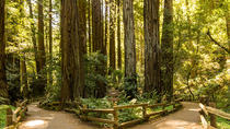 Woods and Wine: Half Day Sonoma Wine Tour plus Muir Woods National Monument, San Francisco, Bike & ...