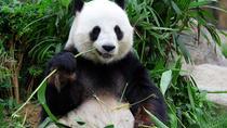 Essence Chongqing and Giant Panda Day Tour, Chongqing, Day Trips