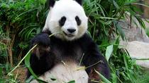 Essential Chongqing Day Tour with Giant Panda Viewing, Chongqing, Private Sightseeing Tours