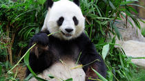 Private Tour: Day Trip to Panda Highlights In and Around Chengdu, Chengdu, Private Sightseeing Tours
