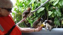Tour Monkey Island and Indian Village, Panama City, Day Cruises