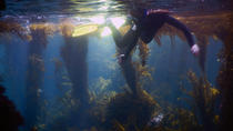 Kayaking and Kelp Forest Snorkeling at Channel Islands National Park, Santa Barbara, Kayaking & ...