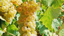 Food, Wine & Sightseeing Day Trip Tour to Frascati and Castelli Romani, Rome, Day Trips