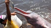 Combo Tour: Swim with Dolphins, Visit an Indian Village and Meeting of the Waters, Manaus, Day Trips