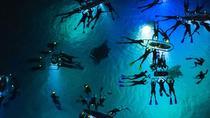 Manta Ray Night Snorkel Adventure, Big Island of Hawaii, 4WD, ATV & Off-Road Tours