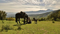 Full-Day Horseback Ride with Barbecue Lunch in the Chilean Countryside, Valparaíso, Horseback ...