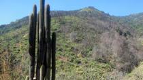 Hiking Tour to the Summit of Cerro La Campana from Valparaiso, Valparaíso, Hiking & Camping