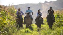 Organic Vineyard Horseback Riding from Santiago, Santiago, Horseback Riding