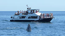 3.5-Hour Snorkel and Lunch Cruise in Los Cabos, Los Cabos, Lunch Cruises