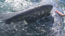 Journey of the Gray Whale 5-Day Expedition from La Paz, La Paz, Multi-day Tours
