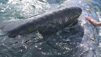 Journey of the Gray Whale: 5-Day Expedition, La Paz, Multi-day Tours