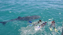 Journey to the Sea of Cortez and Whale Sharks, Los Cabos, Multi-day Tours