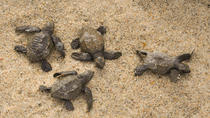 Snorkel and Sea Turtle Adventure!, Los Cabos, Multi-day Tours