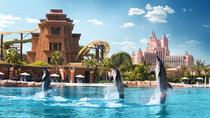 Delfinopplevlese i Atlantis The Palm i Dubai, Dubai