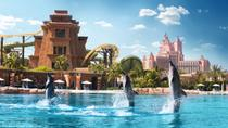 Dolphin Experience at Atlantis The Palm in Dubai, Dubai, null