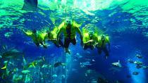 Dubai Atlantis Discover Scuba Dive, Dubai, Snorkeling