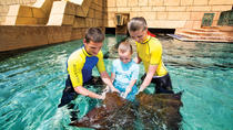 Dubai Atlantis Ray Feeding Experience, Dubai, Scuba Diving