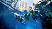 Dubai Atlantis Ultimate Snorkel Experience, Dubai, Shark Diving