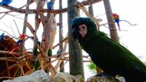 National Aviary Private Tour, Cartagena, Private Sightseeing Tours