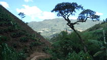 Private Tour: Medellin Coffee Experience and Workshop, Medellín, Cultural Tours