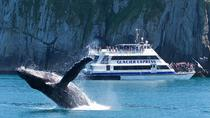 Full-Day Kenai Fjords National Park Cruise, Seward