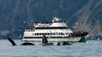 Kenai Fjords National Park Glacier and Wildlife Cruise, Seward, Day Cruises
