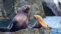 Seward Shore Excursion: Small-Group Kenai Fjords and Resurrection Bay Cruise, Seward, Ports of Call...