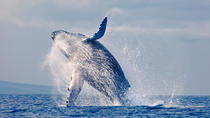 Whales Watching in pacific sea of Colombia, Cali, Day Cruises