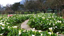 Yangmingshan National Park Day Tour, Taipei, Attraction Tickets
