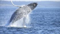 Private Whale Watching & Wine Tour, Cape Town, Wine Tasting & Winery Tours