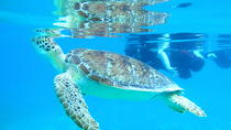 Kayak and Sea Turtle Snorkel with Beach Break, St Thomas, Kayaking & Canoeing