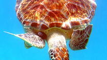 Kayak and Sea Turtle Snorkel with Beach Break, St Thomas, Eco Tours