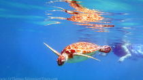 Sea Turtle Snorkel and Nature Walk Tour, St Thomas, Snorkeling