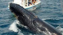 Samaná Peninsula Whale-Watching Tour from Punta Cana, Punta Cana, Dolphin & Whale Watching