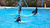 Dolphin Show Sharm El Sheikh, Sharm el Sheikh, Family Friendly Tours & Activities