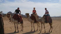 Sharm El Sheikh Camel Safari, Sharm el Sheikh, Nature & Wildlife