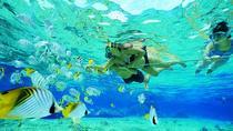 Tiran Island Boat Trip, Sharm el Sheikh, Snorkeling
