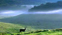 Horton Plains-World's End Tour and Tea Factory Tour From Nuwaraeliya, Nuwara Eliya, Day Trips