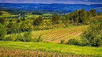 1-Day Package: Vineyard Visit, Wine Tasting Experience, Dine and Overnight Stay in Carcassonne, ...