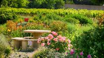 Winery Tour and Wine Tasting in Carcassonne, Carcassonne, Wine Tasting & Winery Tours