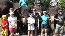 Private Tour: Amazing 4 Days Orang Utan Adventure Tour, Medan, 4WD, ATV & Off-Road Tours
