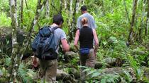 Private Tour: Half Day Tour Bukit Lawang & Orang Utan Jungle Trekking, Medan, Private Sightseeing...