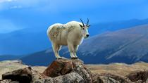 Mount Evans Tour, Denver, Cultural Tours