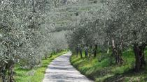 Bike and Wine day tour from Assisi to Spello Cycling Culture and wine-tasting lunch, Perugia, Wine ...