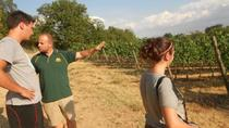 Emotional Winery and Oil mill Tour in Montefalco with Lunch, Umbria, Wine Tasting & Winery Tours