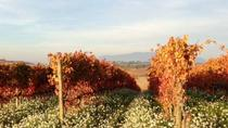 Montefalco and Bevagna Full-day Tour and Wine Tasting , Assisi, Private Sightseeing Tours