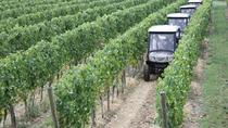 Vineyards Eco-Tour on Board of Electric off-road cars with Wine Tasting, Perugia, Wine Tasting &...