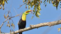 8-Day Tour: Best of Costa Rica, San Jose, Multi-day Tours